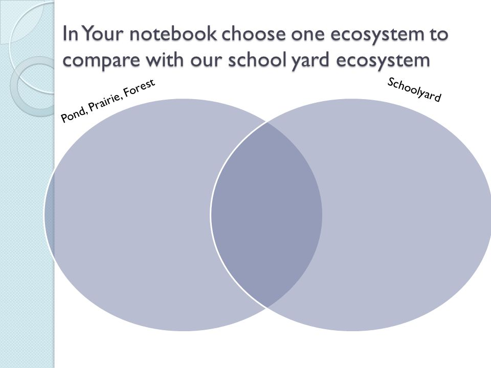 In Your notebook choose one ecosystem to compare with our school yard ecosystem Pond, Prairie, Forest Schoolyard