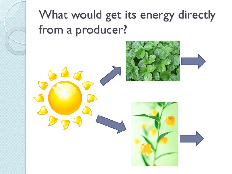 What would get its energy directly from a producer?