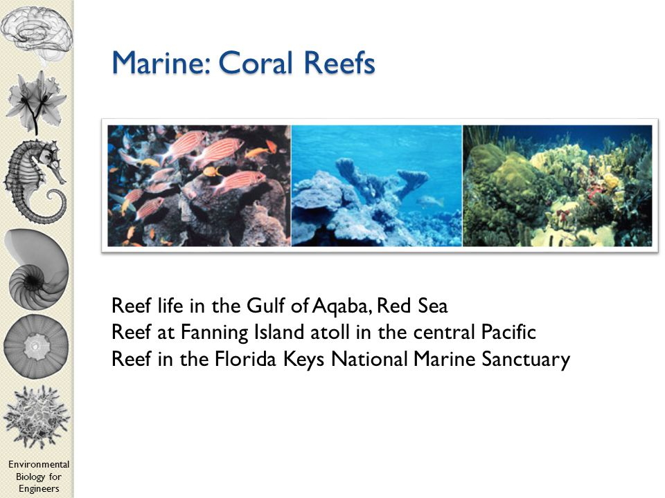 Environmental Biology for Engineers Marine: Coral Reefs Reef life in the Gulf of Aqaba, Red Sea Reef at Fanning Island atoll in the central Pacific Reef in the Florida Keys National Marine Sanctuary