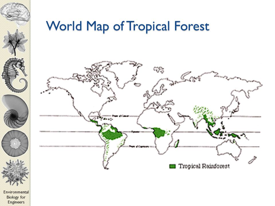 Environmental Biology for Engineers World Map of Tropical Forest