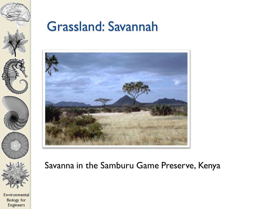 Environmental Biology for Engineers Grassland: Savannah Savanna in the Samburu Game Preserve, Kenya