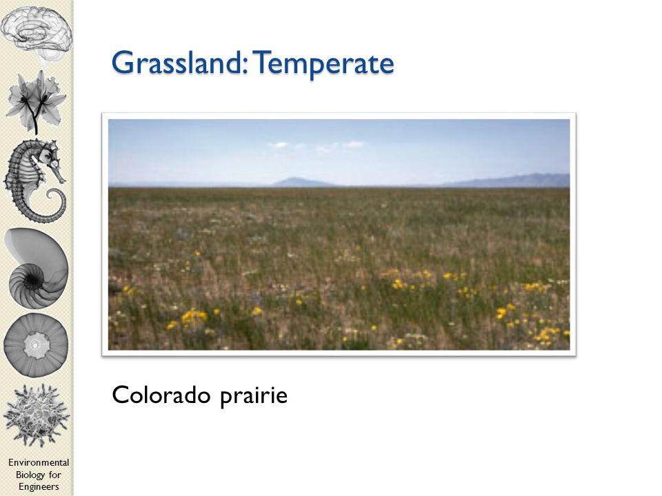 Environmental Biology for Engineers Grassland: Temperate Colorado prairie