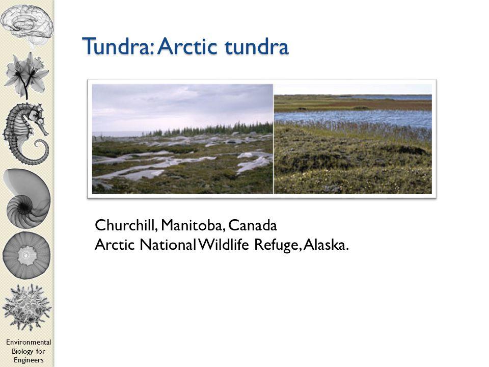 Environmental Biology for Engineers Tundra: Arctic tundra Churchill, Manitoba, Canada Arctic National Wildlife Refuge, Alaska.