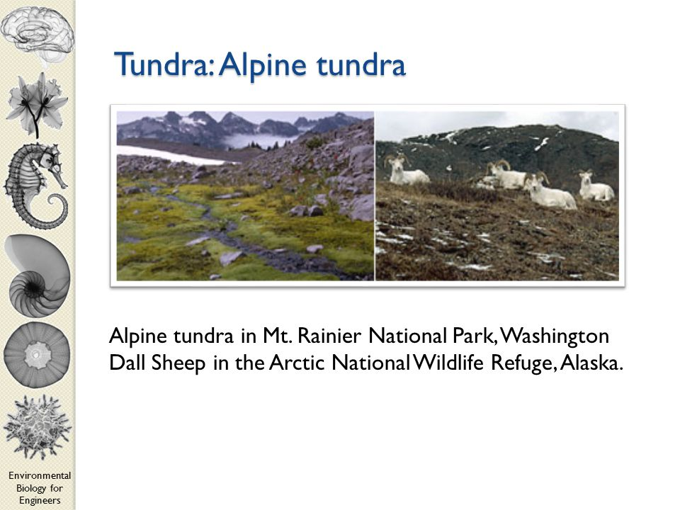 Environmental Biology for Engineers Tundra: Alpine tundra Alpine tundra in Mt.
