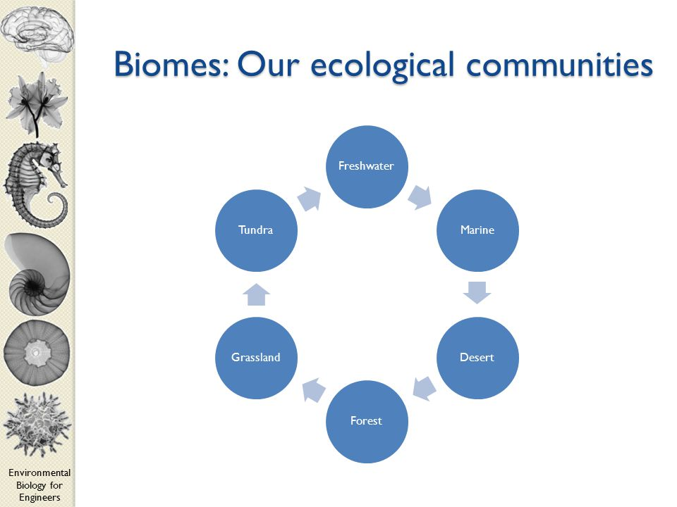 Environmental Biology for Engineers Biomes: Our ecological communities FreshwaterMarineDesertForestGrasslandTundra