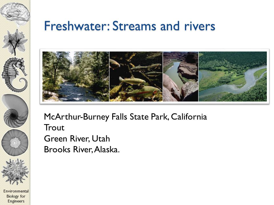 Environmental Biology for Engineers Freshwater: Streams and rivers McArthur-Burney Falls State Park, California Trout Green River, Utah Brooks River, Alaska.