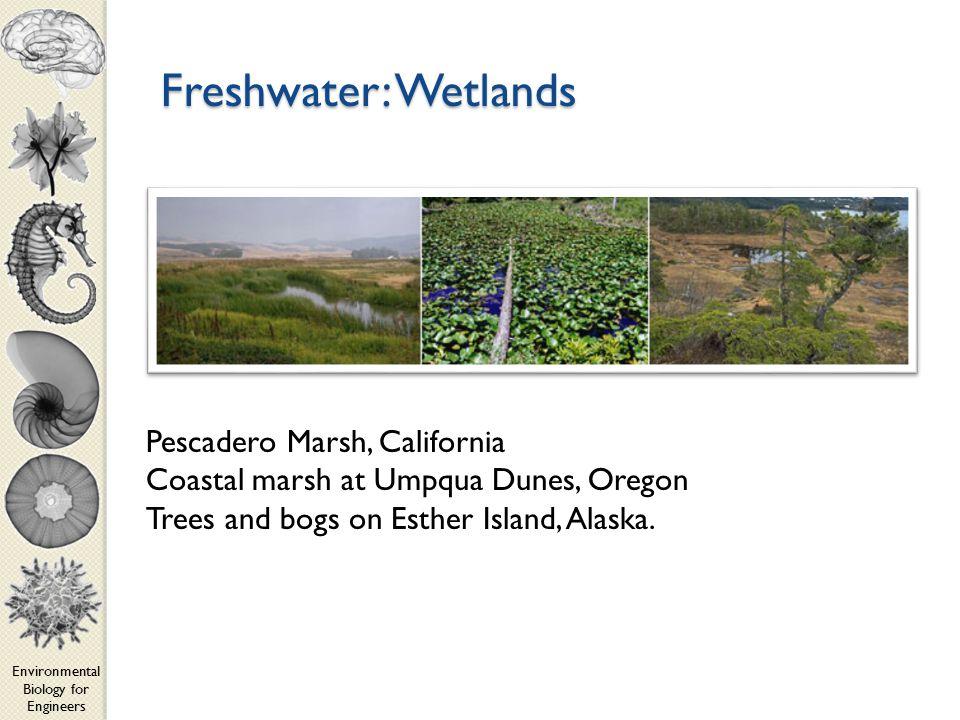 Environmental Biology for Engineers Freshwater: Wetlands Pescadero Marsh, California Coastal marsh at Umpqua Dunes, Oregon Trees and bogs on Esther Island, Alaska.