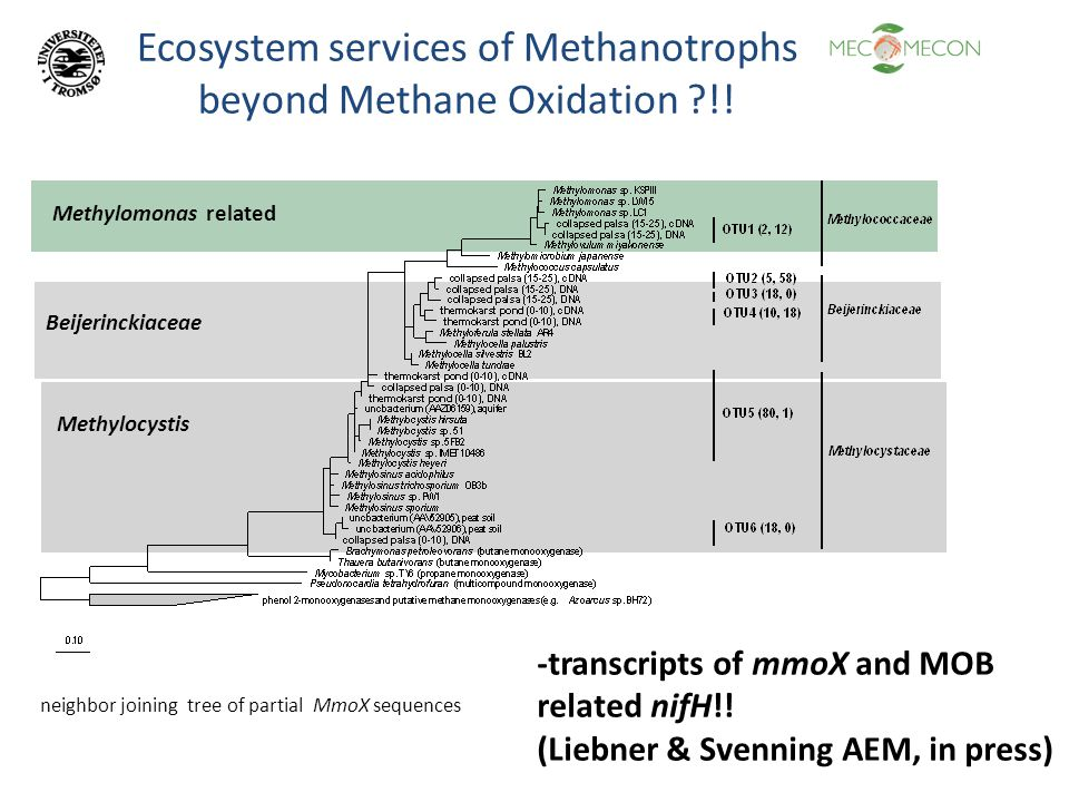 Ecosystem services of Methanotrophs beyond Methane Oxidation ?!! neighbor joining tree of partial MmoX sequences Methylomonas related Beijerinckiaceae