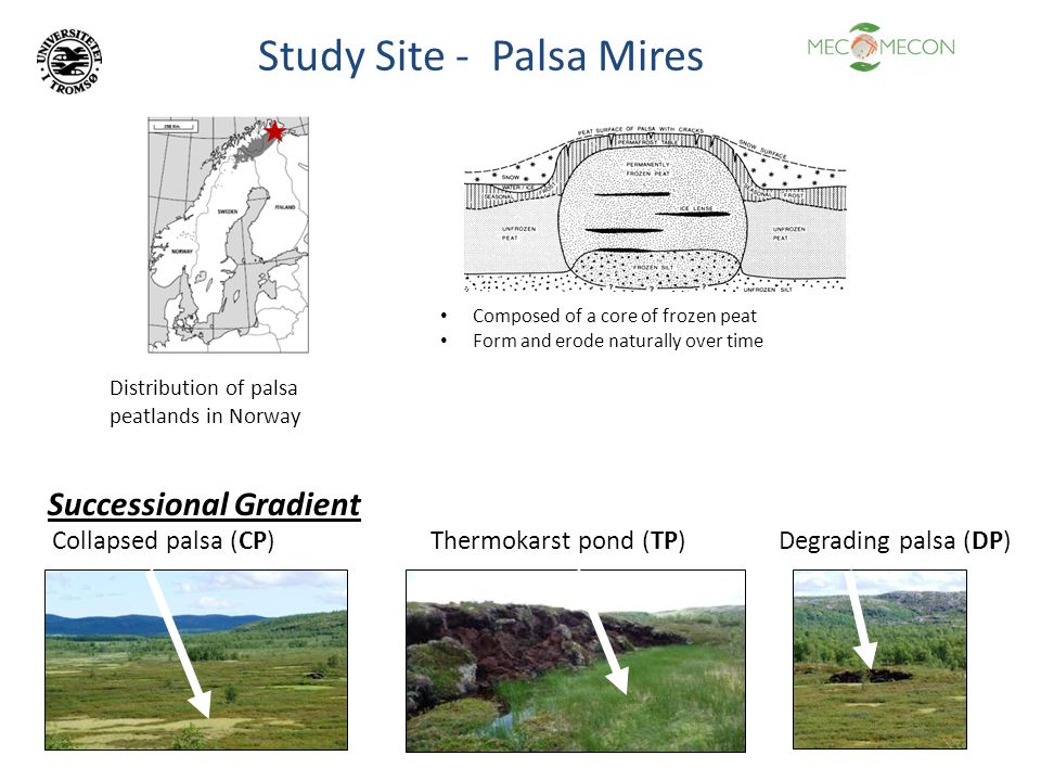 Study Site - Palsa Mires Composed of a core of frozen peat Form and erode naturally over time Distribution of palsa peatlands in Norway Successional G