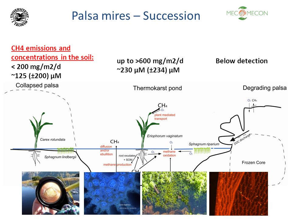 Palsa mires – Succession CH4 emissions and concentrations in the soil: < 200 mg/m2/d ~125 (±200) µM up to >600 mg/m2/d ~230 µM (±234) µM Below detection