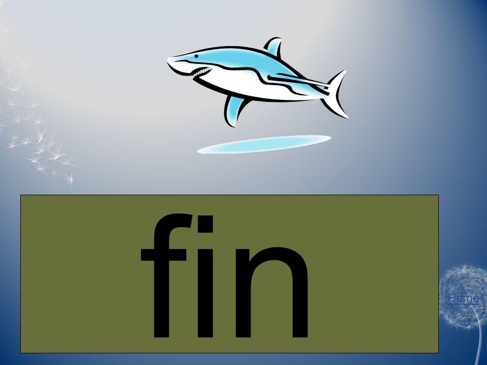Home A shark has a big ___ on top. fin