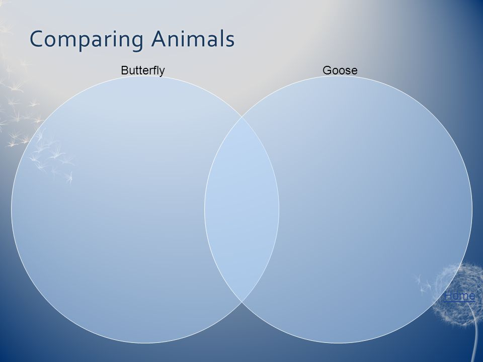Home Comparing AnimalsComparing Animals ButterflyGoose