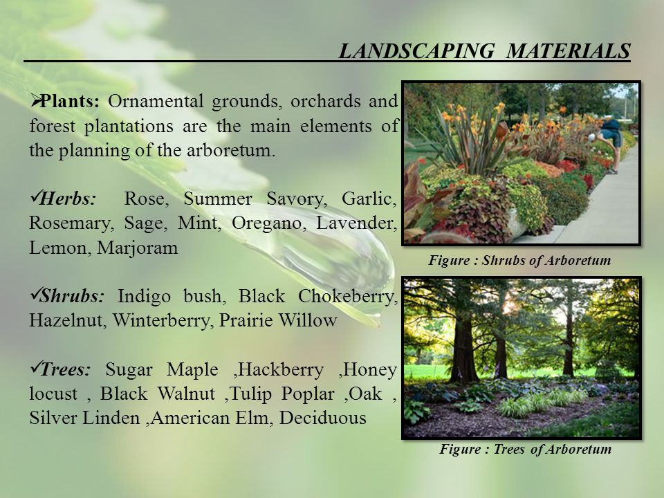 LANDSCAPING MATERIALS  Plants: Ornamental grounds, orchards and forest plantations are the main elements of the planning of the arboretum.