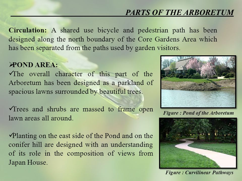 PARTS OF THE ARBORETUM Circulation: A shared use bicycle and pedestrian path has been designed along the north boundary of the Core Gardens Area which has been separated from the paths used by garden visitors.