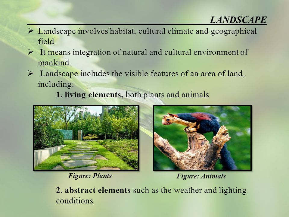 LANDSCAPE  Landscape involves habitat, cultural climate and geographical field.