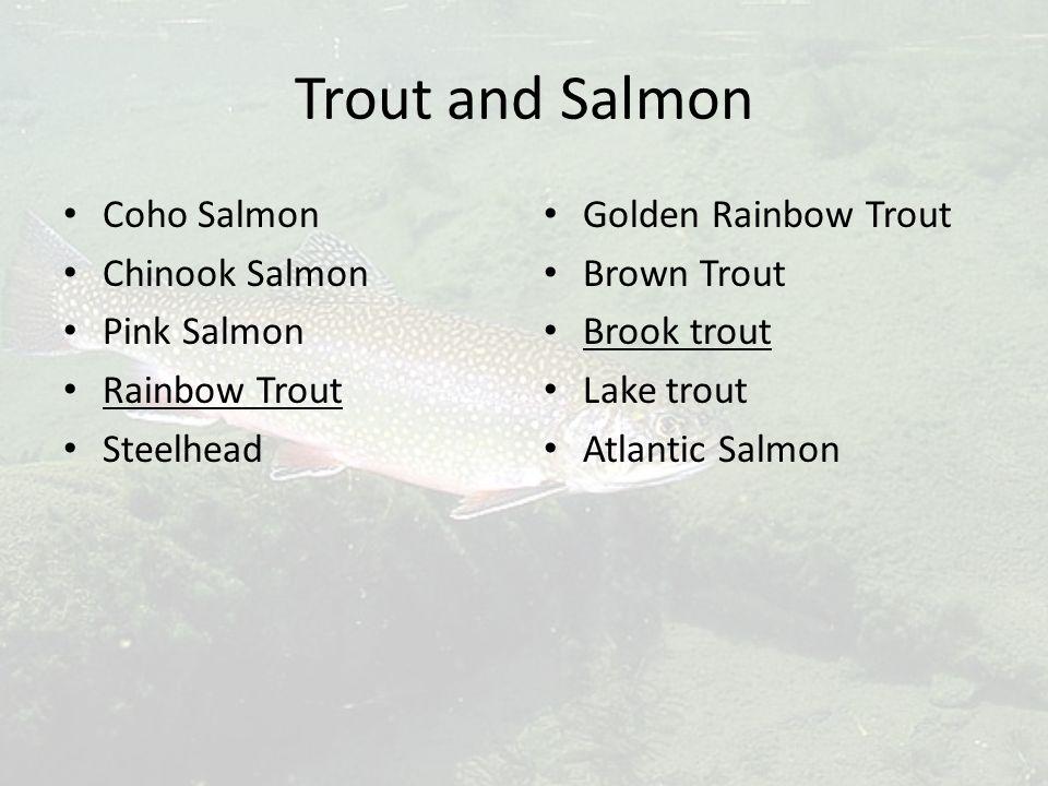 Trout and Salmon Coho Salmon Chinook Salmon Pink Salmon Rainbow Trout Steelhead Golden Rainbow Trout Brown Trout Brook trout Lake trout Atlantic Salmon
