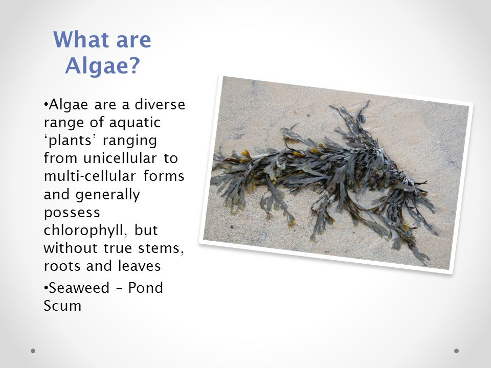 What are Algae? Algae are a diverse range of aquatic 'plants' ranging from unicellular to multi-cellular forms and generally possess chlorophyll, but