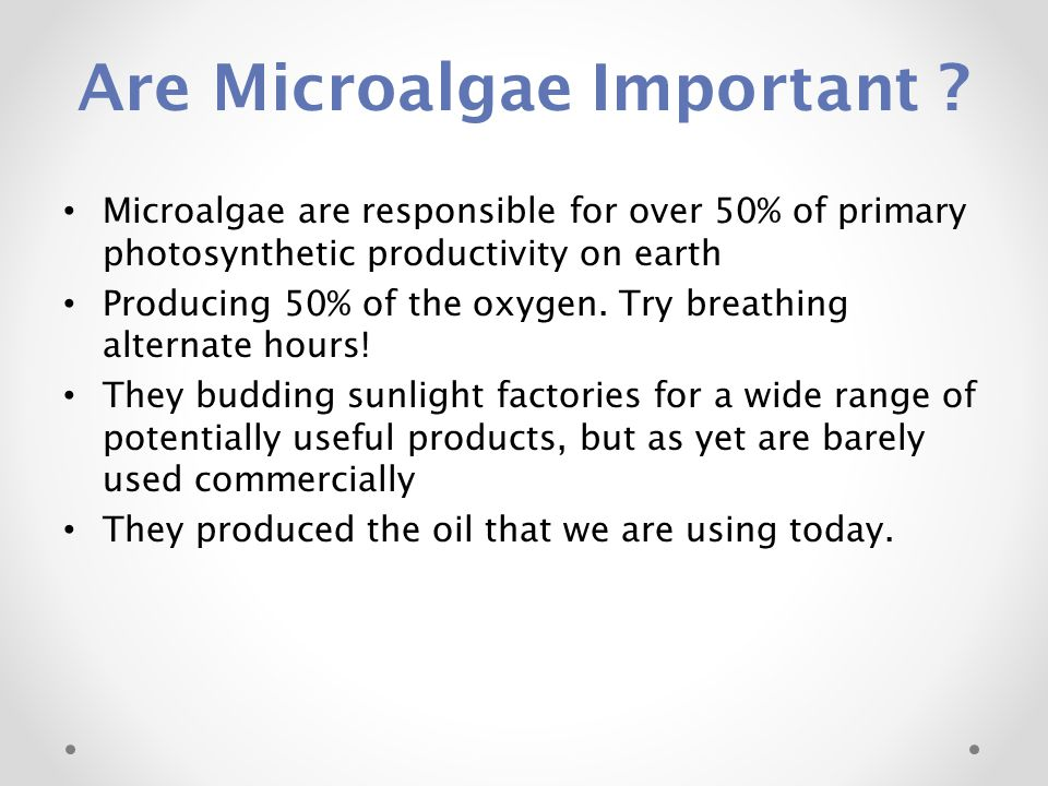 Are Microalgae Important ? Microalgae are responsible for over 50% of primary photosynthetic productivity on earth Producing 50% of the oxygen. Try br