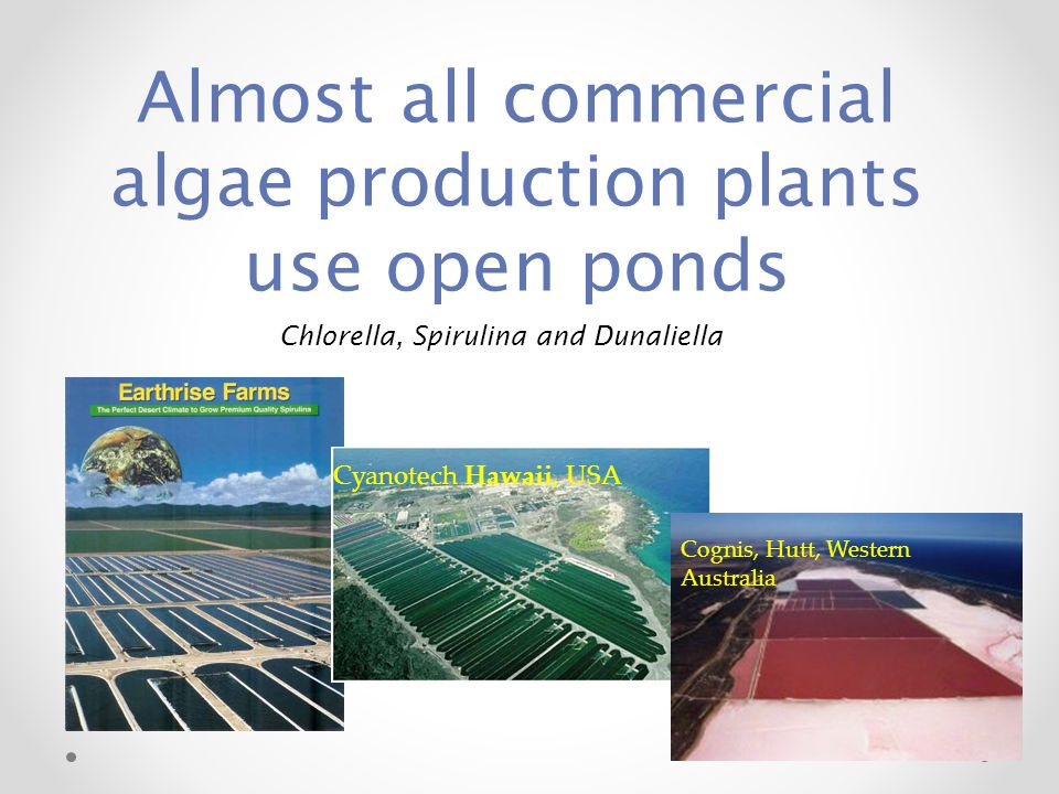 Almost all commercial algae production plants use open ponds Cyanotech Hawaii, USA Cognis, Hutt, Western Australia Chlorella, Spirulina and Dunaliella