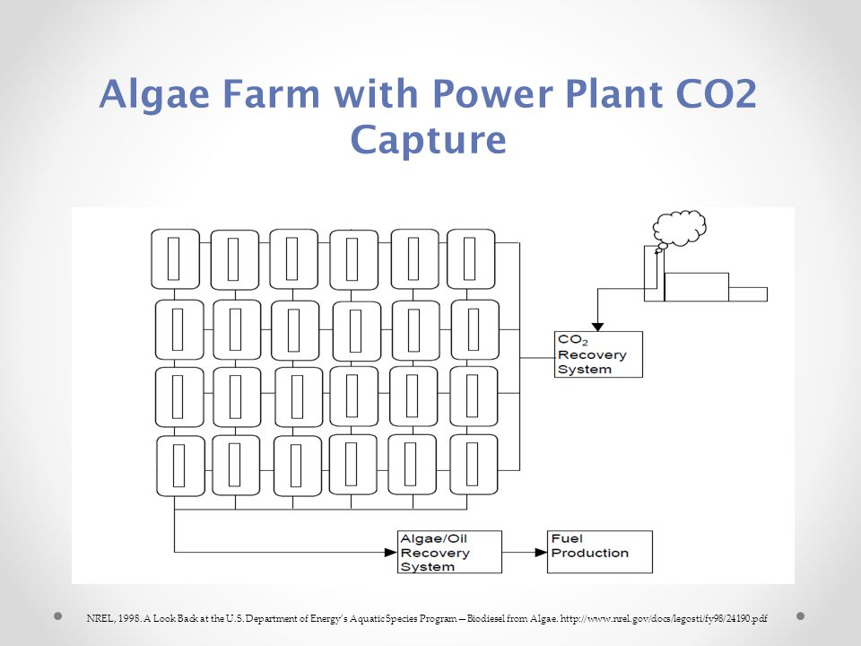Algae Farm with Power Plant CO2 Capture NREL, 1998.