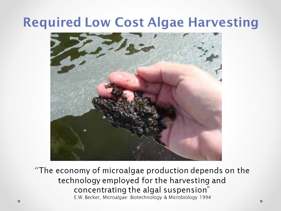 Required Low Cost Algae Harvesting The economy of microalgae production depends on the technology employed for the harvesting and concentrating the algal suspension E.W.