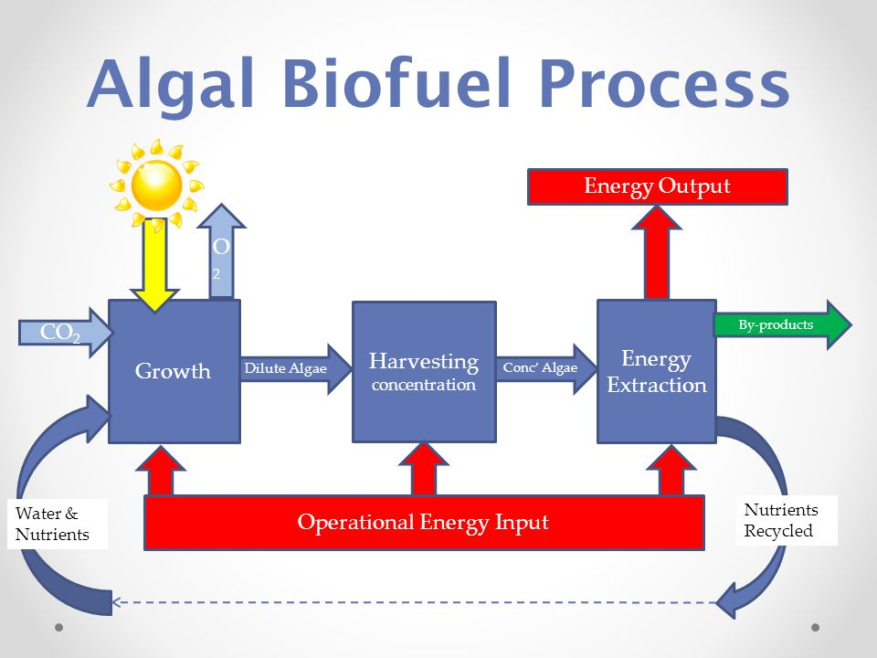 Algal Biofuel Process Dilute Algae Conc' Algae Growth Harvesting concentration Energy Extraction Operational Energy Input Nutrients Recycled Water & Nutrients CO 2 Energy Output By-products O2O2