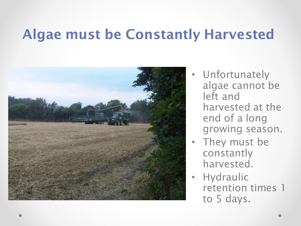 Algae must be Constantly Harvested Unfortunately algae cannot be left and harvested at the end of a long growing season. They must be constantly harve