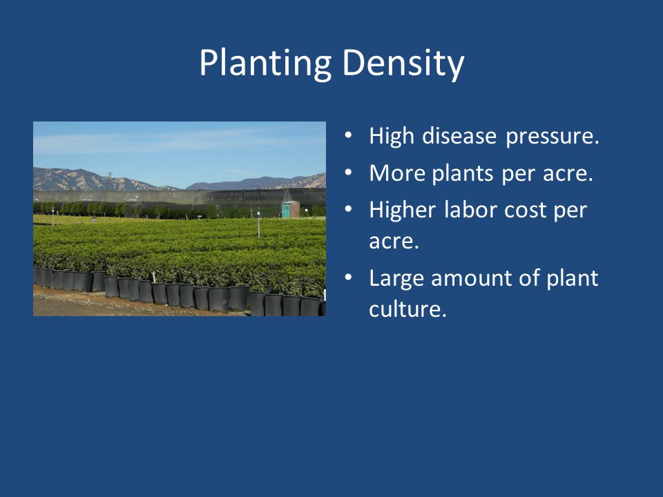 Planting Density High disease pressure. More plants per acre. Higher labor cost per acre. Large amount of plant culture.