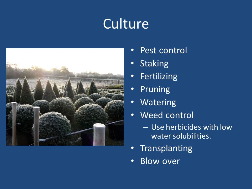 Culture Pest control Staking Fertilizing Pruning Watering Weed control – Use herbicides with low water solubilities.