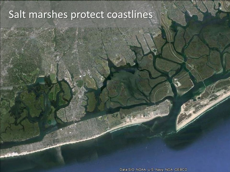 Salt marshes protect coastlines