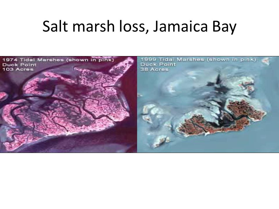 Salt marsh loss, Jamaica Bay
