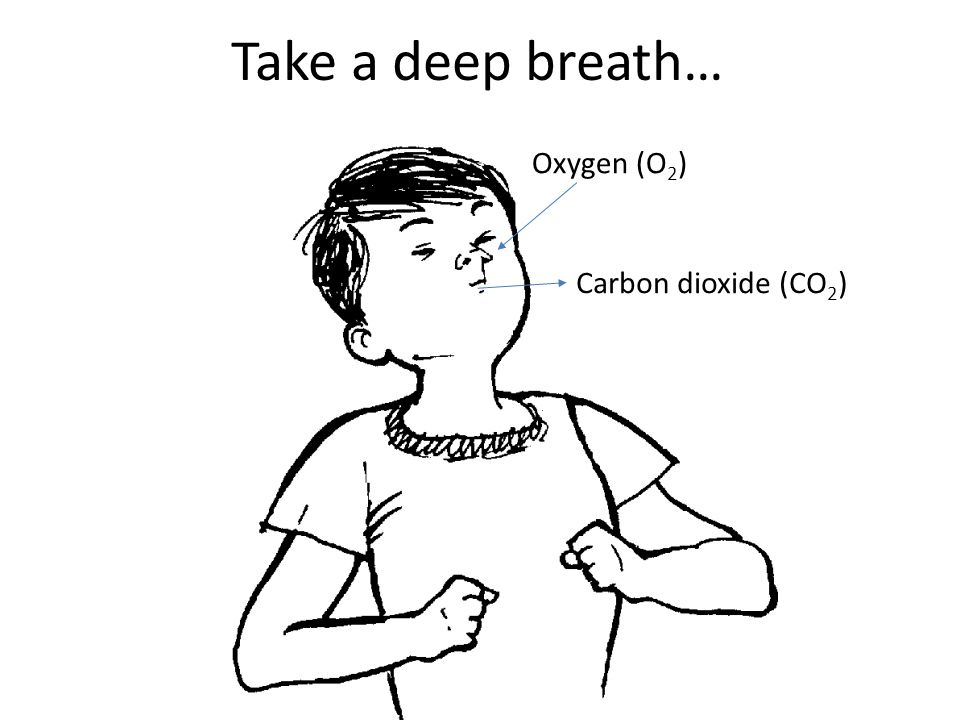 Take a deep breath… Oxygen (O 2 ) Carbon dioxide (CO 2 )