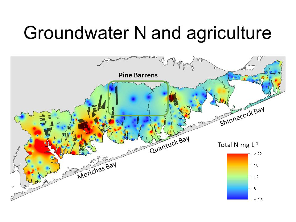 Groundwater N and agriculture Total N mg L -1 Pine Barrens Moriches Bay Shinnecock Bay Quantuck Bay