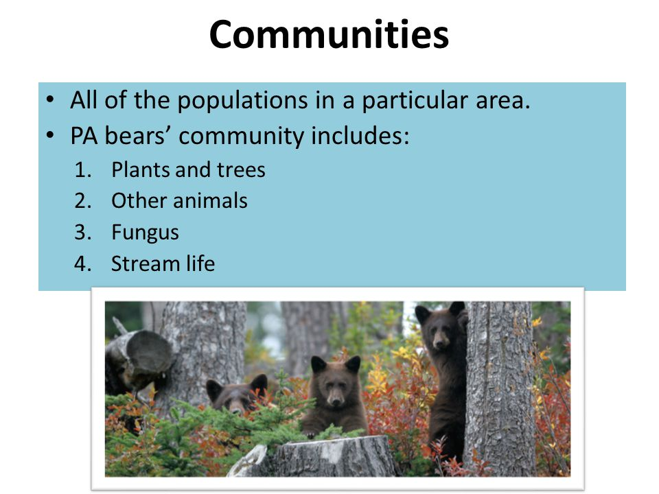 Communities All of the populations in a particular area. PA bears' community includes: 1.Plants and trees 2.Other animals 3.Fungus 4.Stream life