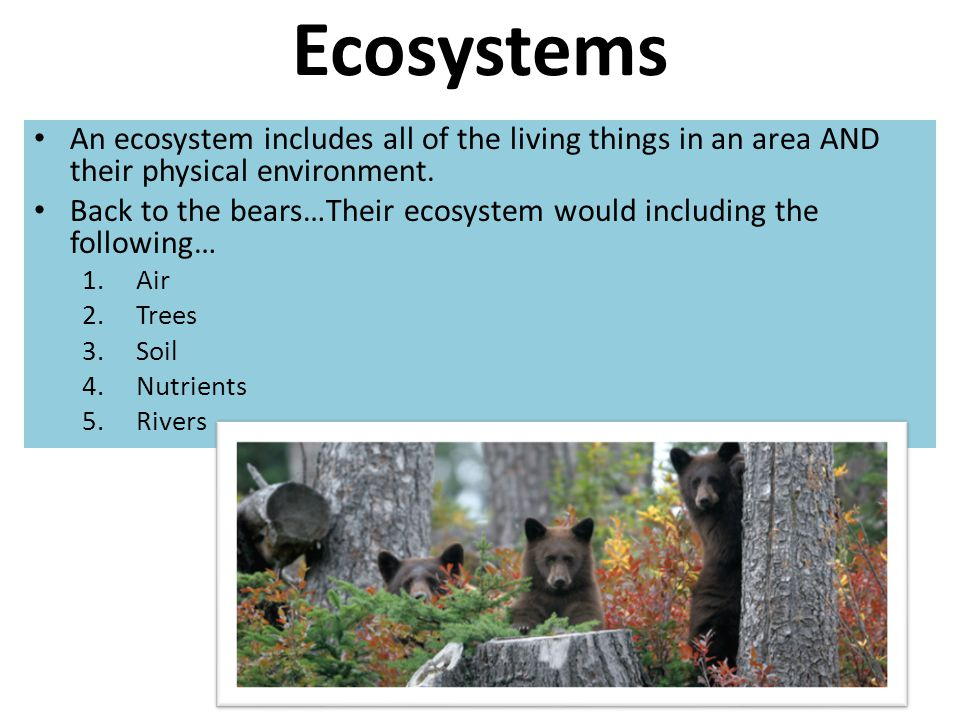 Ecosystems An ecosystem includes all of the living things in an area AND their physical environment. Back to the bears…Their ecosystem would including