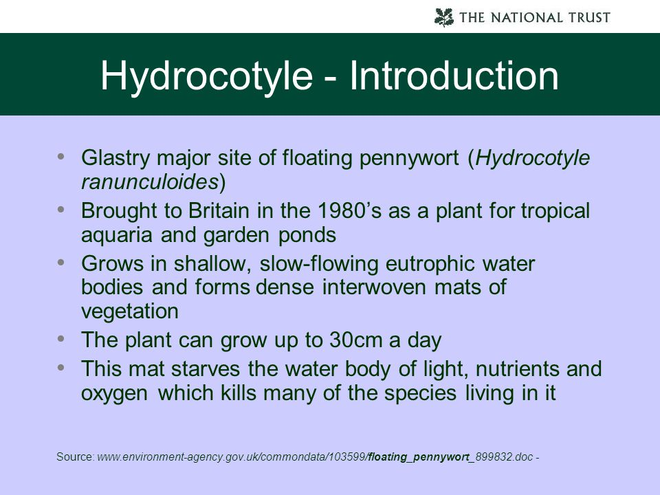 Hydrocotyle - Introduction Glastry major site of floating pennywort (Hydrocotyle ranunculoides) Brought to Britain in the 1980's as a plant for tropic