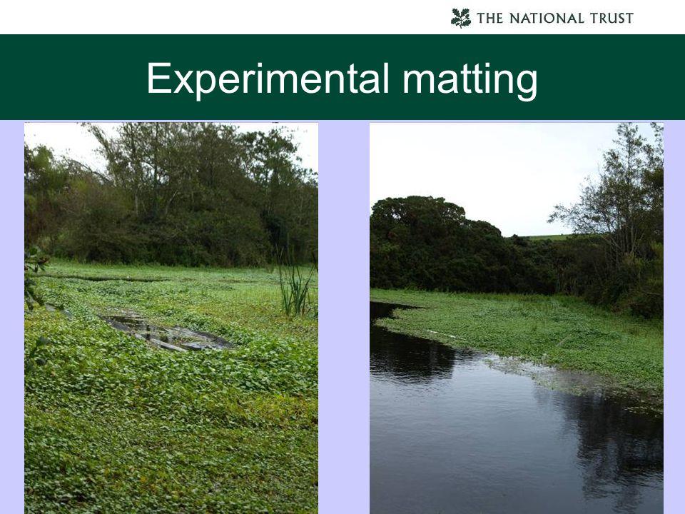 Experimental matting