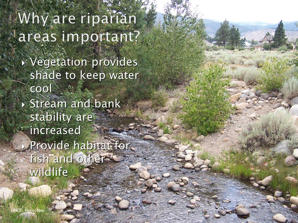  Vegetation provides shade to keep water cool  Stream and bank stability are increased  Provide habitat for fish and other wildlife UNCE, Reno, Nev.