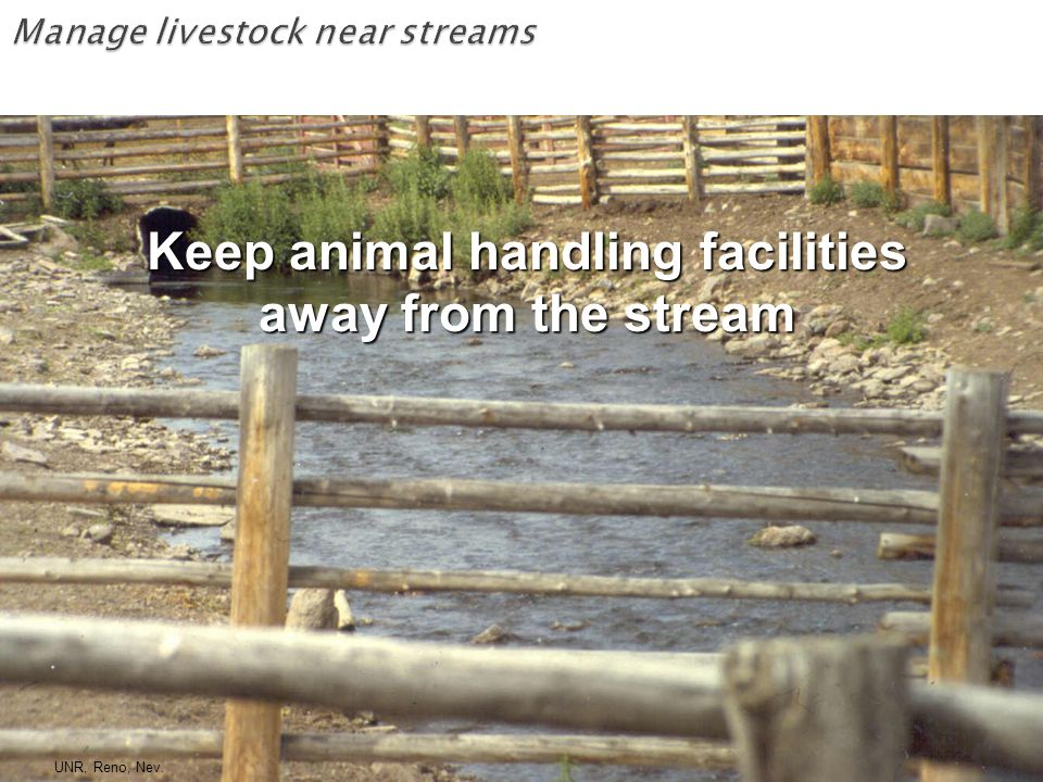 Keep animal handling facilities away from the stream UNR, Reno, Nev.