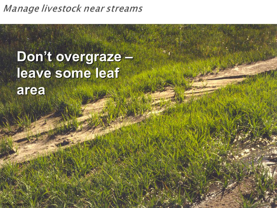 UNR, Reno, Nev. Don't overgraze – leave some leaf area UNR, Reno, Nev.