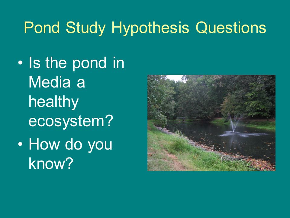 Pond Study Hypothesis Questions Is the pond in Media a healthy ecosystem How do you know