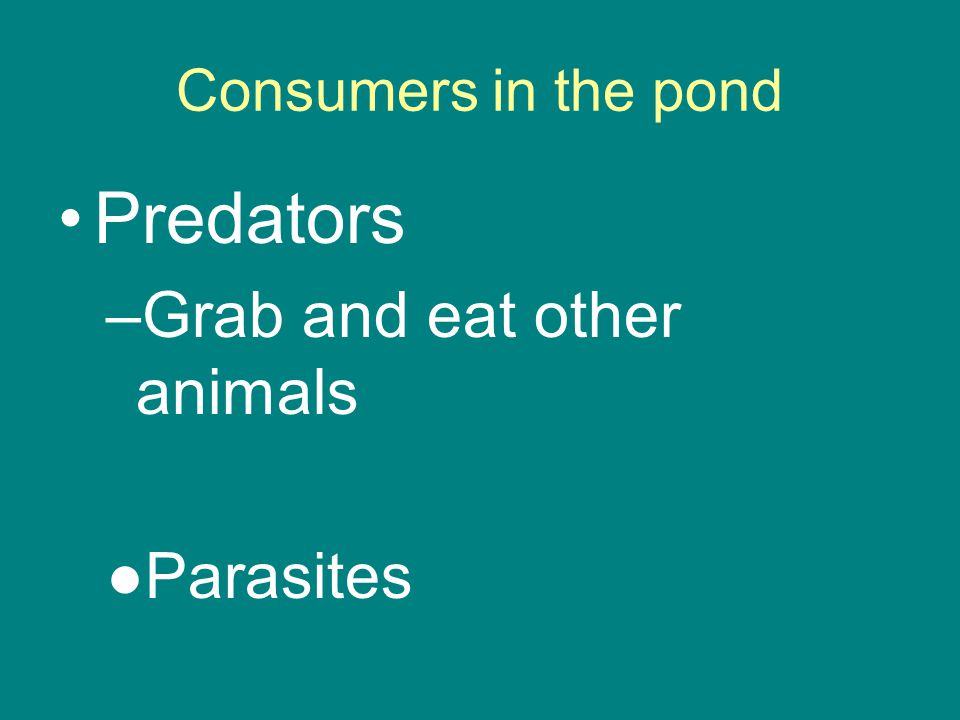 Consumers in the pond Predators –Grab and eat other animals ●Parasites