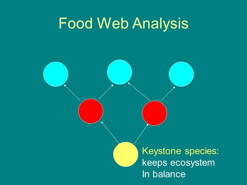 Food Web Analysis Keystone species: keeps ecosystem In balance