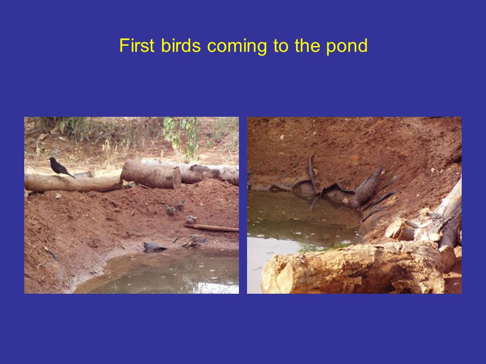 First birds coming to the pond