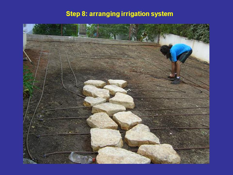Step 8: arranging irrigation system