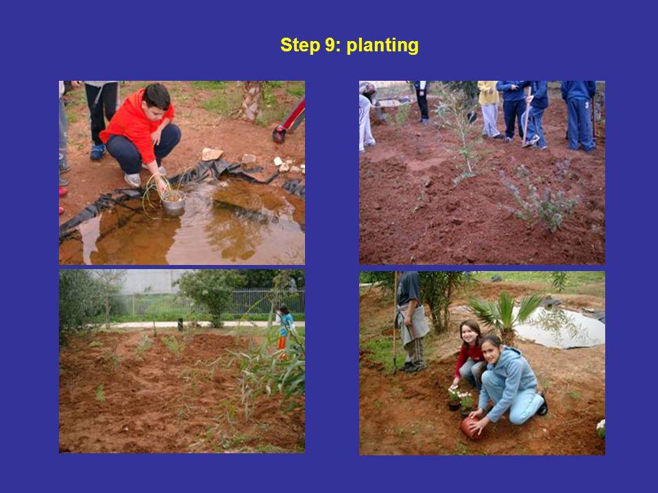 Step 9: planting