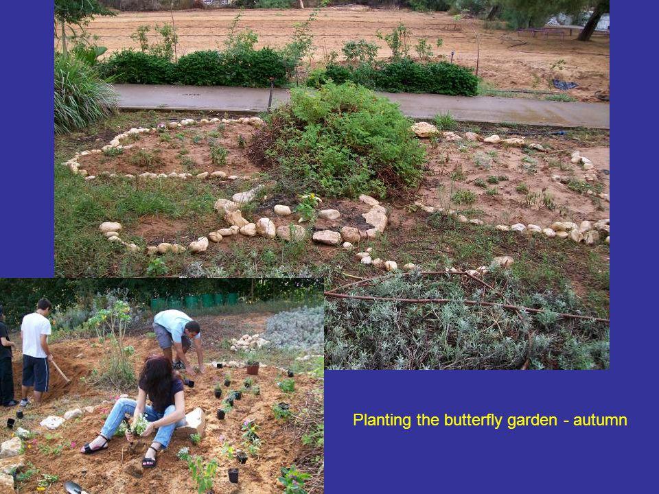 Planting the butterfly garden - autumn