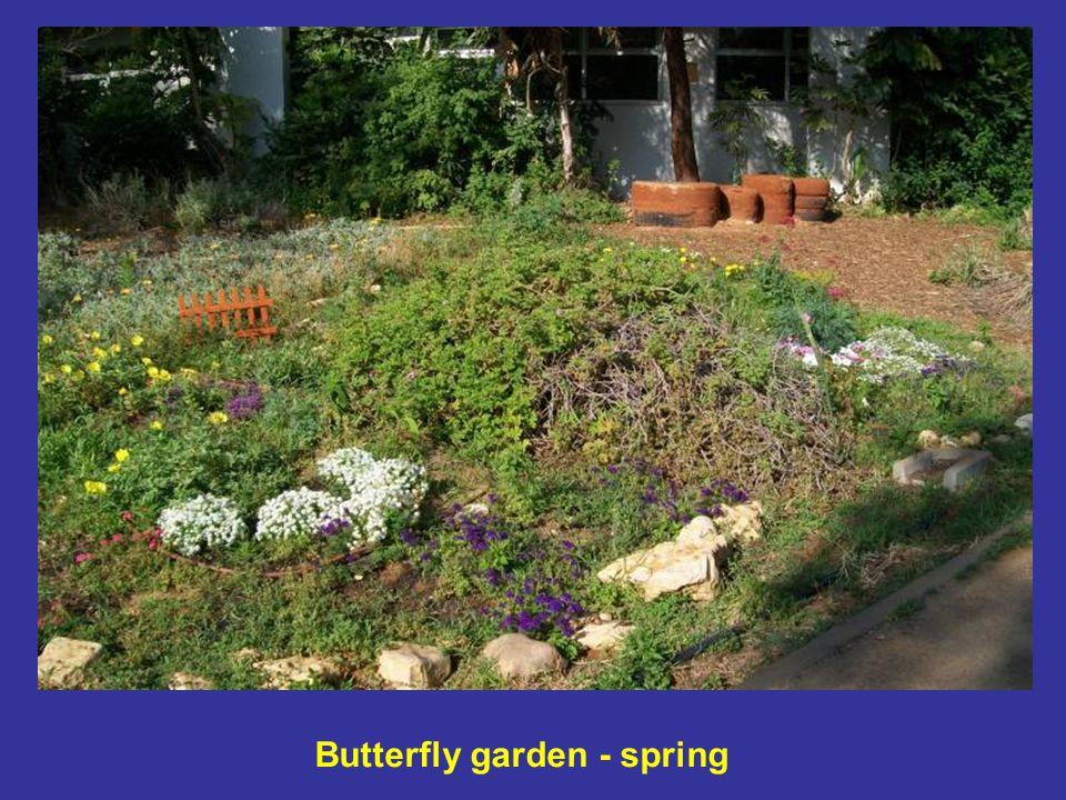 Butterfly garden - spring