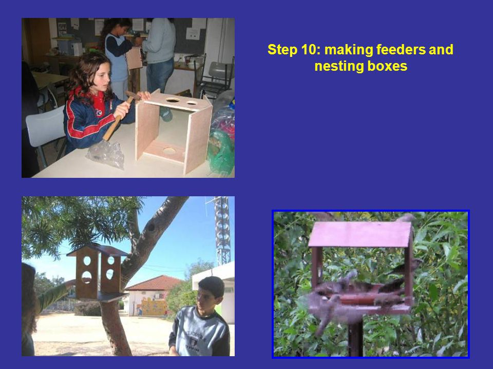 Step 10: making feeders and nesting boxes