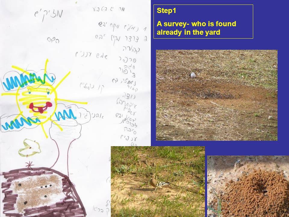 שלב מוקדם – בדיקה – מה כבר יש בגינה Step1 A survey- who is found already in the yard